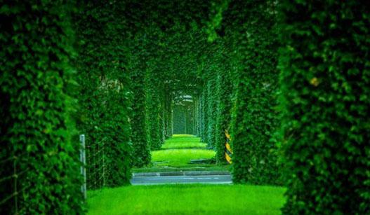 """成都二环路高架水泥桥墩变身""""绿色长廊"""""""