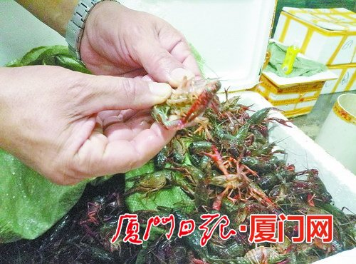小龙虾进货价上涨50% 厦门售价未有大幅波动