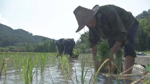 三明生态新城湿地公园又有新看点 稻田彩绘与你相约百蝶花海