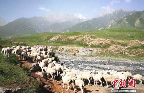 中央措辞严厉批祁连山生态问题 甘肃书记称知耻奋进