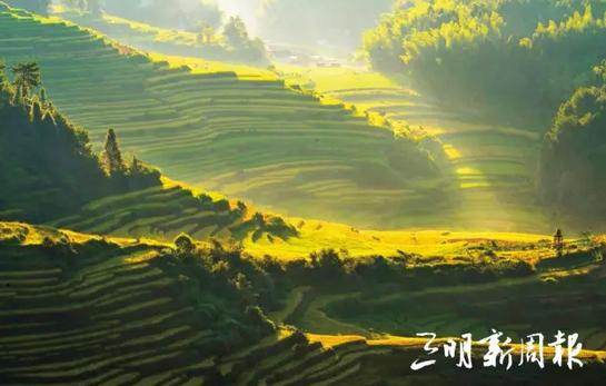 福建7个产粮大县获得中央财政奖励