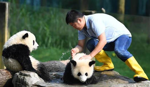 """""""大熊猫奶爸""""的小幸福"""