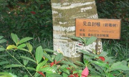 战狼2里吴京卢靖姗找的毒液树真的存在?毒液树会让人致命吗