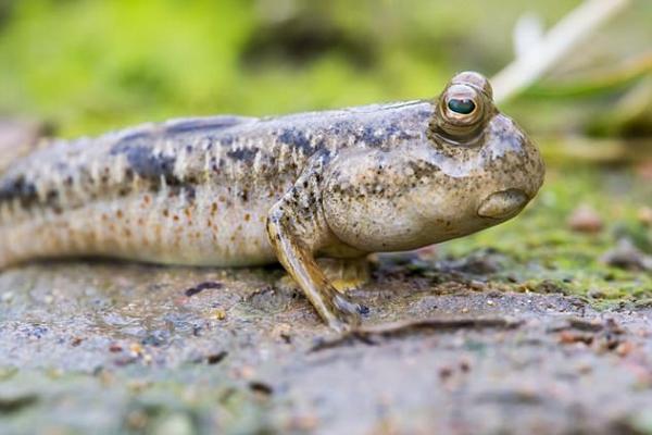 """澳洲河面惊现神秘生物 被称为""""丹特里河水怪"""""""