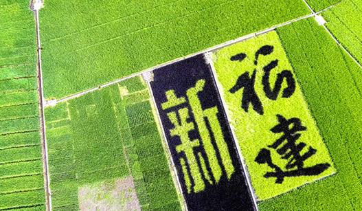 """稻田巨型彩绘:""""裱""""在八闽大地的艺术画卷"""