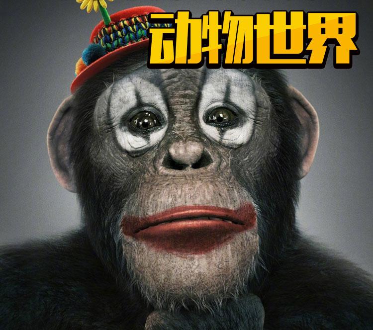 李易峰参演的《动物世界》正式杀青 这可能是最期待的