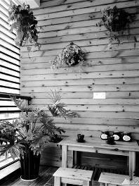 把植物种在墙上:绿植当背景 玩出新花样