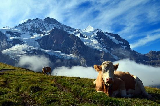 瑞士开始售卖纯净山区空气 7升装空气售价21美元