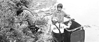 四川南充78条鳄鱼转运途中集体出逃 已找回75条