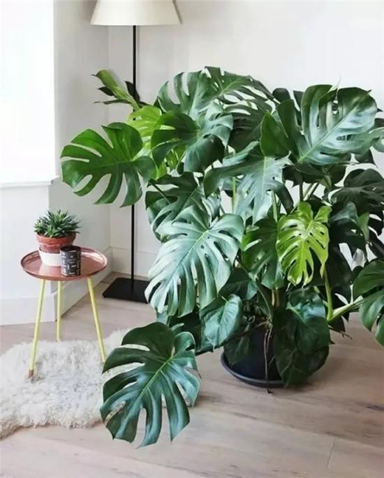 ca88亚洲城手机版下载_八种家居植物打造秘密花园 陪你度过漫长岁月