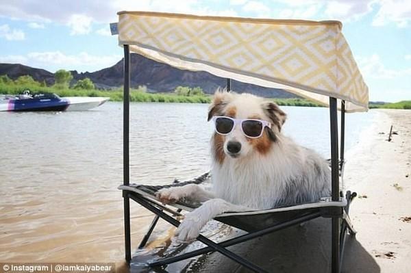 英国主人晒出宠物狗的幸福生活:堪比家庭小主人
