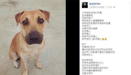 Ella宠物狗遭投毒不治而亡 发文痛斥其残忍