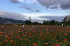 福州花海公园赏花正当时