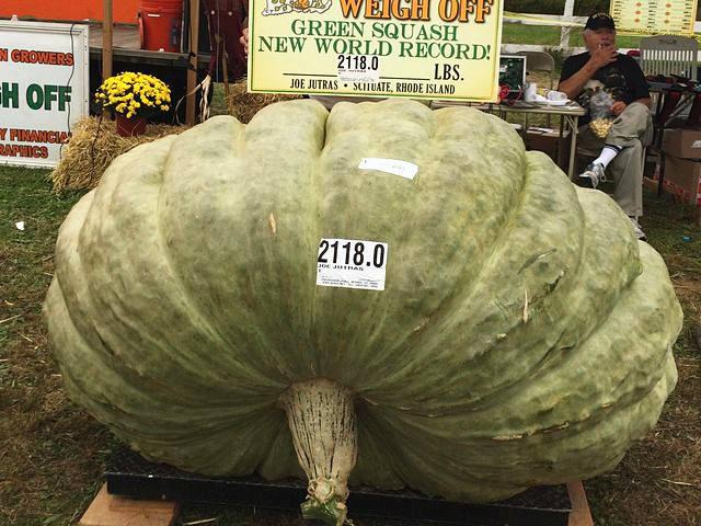 三破纪录!美农民潜心研究种出近1吨重绿南瓜