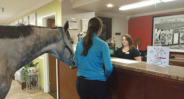 """检验酒店""""宠物友好""""政策 加拿大女子带马入住"""