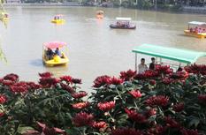 菊花芬芳、诗韵悠长!今秋西湖公园菊花展让人流连忘返