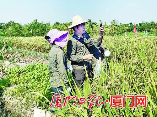 ca88亚洲城手机版下载_厦门启动农用地污染状况详查工作 预计明年底完成全部工作