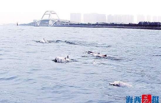 中华白海豚保护行动计划在厦启动 将推APP鼓励公众参与