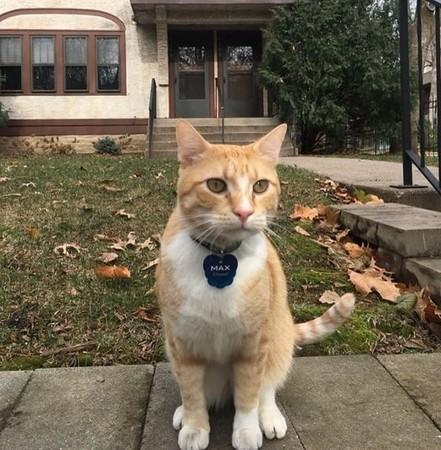 橘猫被大学图书馆禁入却走红 网友:让它进去吧