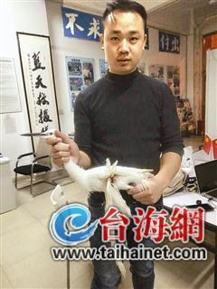 ca88亚洲城手机版下载_受伤的白鹭落难厦门路边 好心市民把它交给救援队