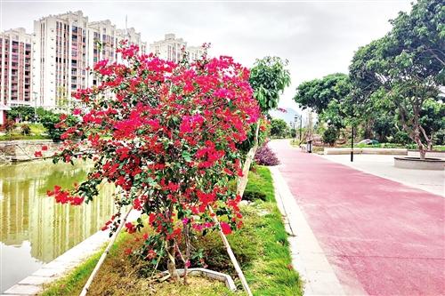莆田城厢建成区绿化超全省平均水平 人均公园绿地面积15.03平方
