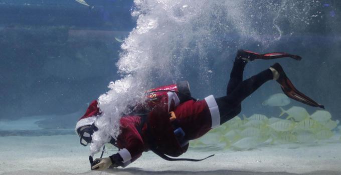 首尔圣诞老人与美人鱼惊现水族箱 与沙丁鱼群共舞