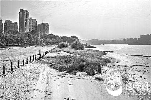 沙滩上长出野草,遇到洪峰河沙又会流失
