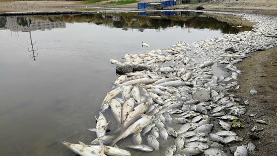 石狮院后水库内大量鱼类死亡 初步调查系缺氧