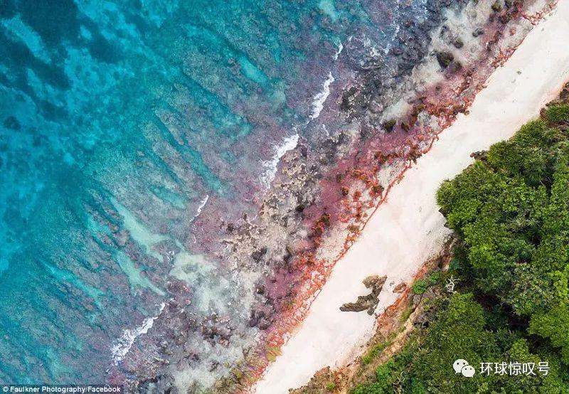 气势恢宏!澳圣诞岛数百万小红蟹大军迁向丛林