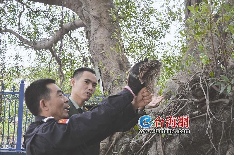 龙海:猫头鹰误闯民宅 所民警带至野外放生