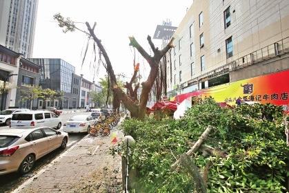 福州万象城停车场7棵大树被截顶 台江园林已介入调查