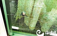 """福州一小区5楼落地玻璃窗有""""弹孔"""" 业主怀疑有人使用弹弓或气枪射击"""