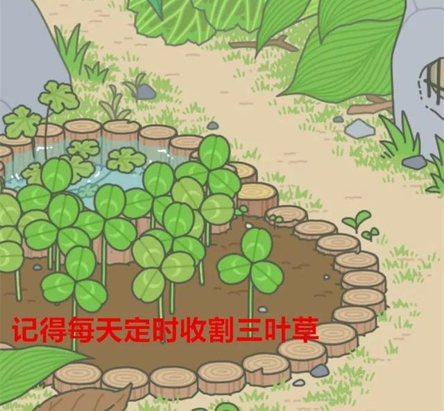 v攻略攻略超详细青蛙,解锁7大隐藏秘笈!暹粒攻略越南图片