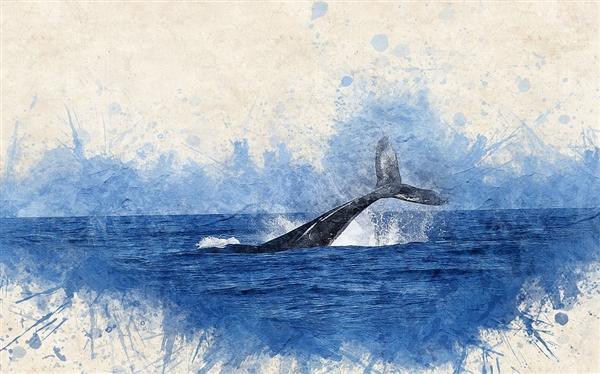 第一只会说话的虎鲸掌握人类语言:科学家惊喜