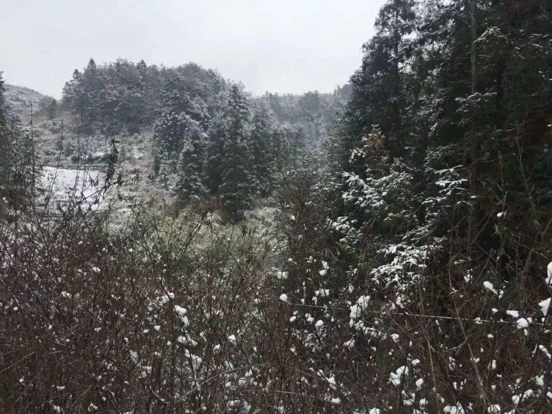 福州市區真的下雪啦!世歐王莊、五四北、倉山……