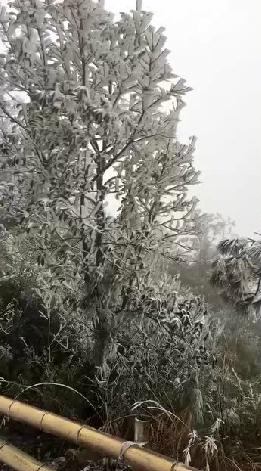 漳州这些地方都下雪了!快看有没有你的家乡~