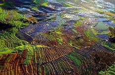 尤溪联合梯田入选全球重要农业文化遗产