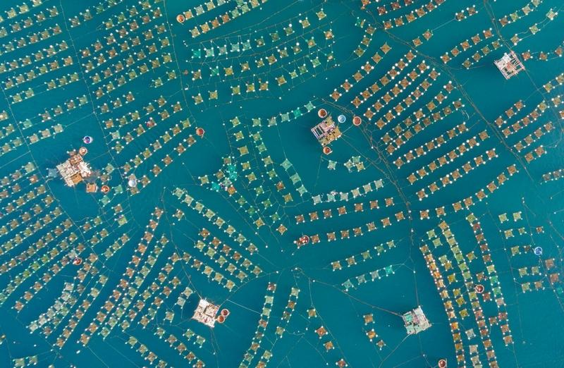 特朗(trung)获奖作品:越南绥和市的小龙虾养殖场内星罗棋布的养殖设施图片