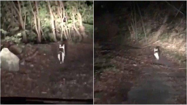 赞!日迷路司机深夜森林中被神秘猫咪安全引回家