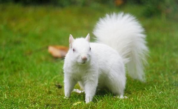 英男子花园发现白化松鼠 憨厚可爱上演萌趣吃食