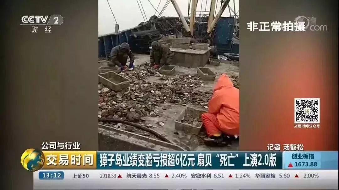 """央视记者暗访獐子岛:扇贝死了或为""""人祸"""""""