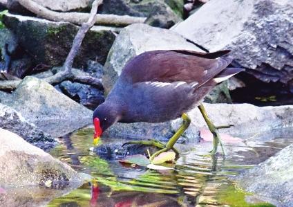 控噪三个月 福州西湖公园鸟儿剧增