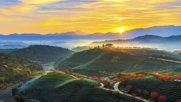 """龙岩漳平台创园""""大陆阿里山""""景区获批国家3A级旅游景区"""