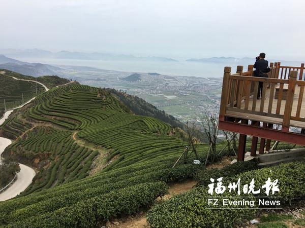 福州连江:长龙茶山万亩连片 新芽萌发春光好