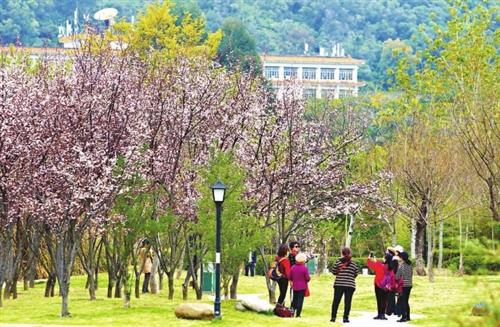 春暖花开 福建农林大学成网红赏花地