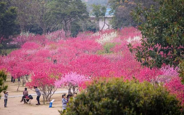 福建3月赏春最强帖!九市一区最顶级的春色都在这里!