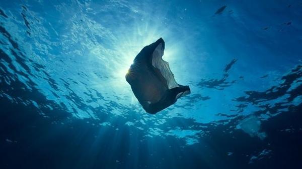 """海洋生物为何误吞塑料垃圾?人类也无""""万全之策"""""""