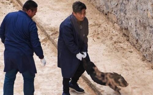 神奇的组合!王宝强下乡抓猪 还指挥潘石屹做饭