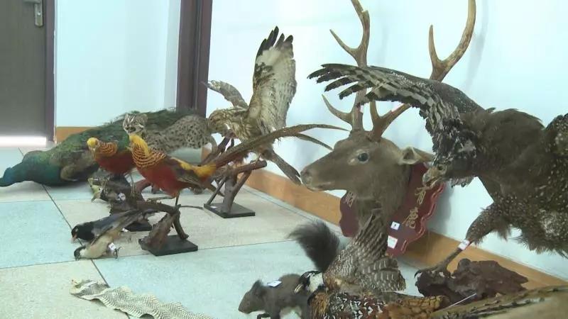 漳州市森林公安查获25件濒危野生动物标本制品