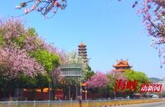 ca88亚洲城手机版下载_4月不到ca88亚洲城手机版下载这网红路自拍打卡 真的对不起美颜相机
